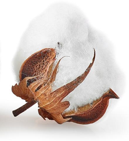 Qu'est-ce que le coton bio ?